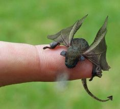 A tiny magical dragon...oh I need one of my own. (look at his tiny dragon breath)