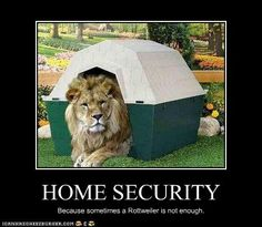 funny-pictures-lion-secures-your-home.jpg - http://ebooks2buy.biz/photojobs…