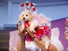 carnival costume contest for dogs*******Folha de S.Paulo - Folhinha - Shopping organiza 'cãocurso' de fantasias para o Carnaval - 06/02/2013