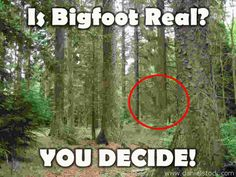 Bigfoot Encounters the Real Myth Buster - It's okay, you can all go home now. Bigfoot is bullshit.