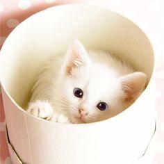 white cute cat (from Facebook)