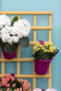 If you live in a teeny-tiny apartment, are a great way to introduce greenary. Take a normal trellis, paint it a bright colour like Sun Dial from Ronseal's garden paint range then plant up a few colourful pots. so colourful and cheerful