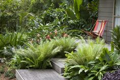 by Secret Gardens of Sydney by Secret Gardens of Sydney Ferns like these are ideal fillers in a tropical design. They not only add both structure and softness to the space, but the ferns will benefit from the shade provided by surrounding plants. Wooden steps to a beach chair overlooking the garden add a beachy touch to the scene.