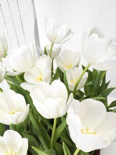 kukkainfo.fi -> horoskooppikukka -> tulppaani=kauris Flowers, Plants, Wedding, Chic, Celebrations, Valentines Day Weddings, Shabby Chic, Elegant, Plant