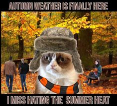 20 Cute and Funny Animal Fall Pictures You'll Love More than PSL #fallmemes #cutememe #cuteanimals #funnyanimals #animalmemes Cute Funny Dogs, Funny Puns, Cute Funny Animals, Haha Funny, Funny Kittens, Hilarious, Funny School Pictures, Funny Animal Pictures, Grumpy Cat Humor