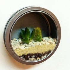 Refrigerator Magnet Terrarium: The Tillandsia air plant is an easy to care for plant that will thrive under a number of lighting conditions, including the fluorescent lights in your kitchen or office. Terrarium Diy, Summer Diy, Summer Crafts, Diy Mini Jardim, Air Plants, Indoor Plants, Plantas Bonsai, Decoration Plante, Terraria