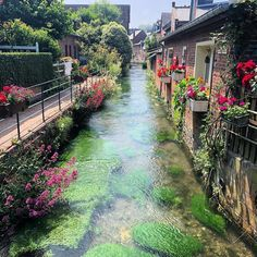 Veules les roses📍 Normandie - France Normandie France, Provence France, Etretat France, Life Is Beautiful, Beautiful Places, French Trip, Camping Cornwall, European Road Trip, World Travel Guide