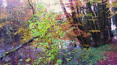 Dunmore Wood Nov. 16 2014