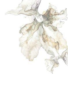 Piet Boon Styling by Karin Meyn | Golden ink flower