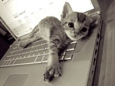 """""""A cat and a computer are somewhat alike--they both purr, and like to be stroked, and spend a lot of the day motionless.  They also have secrets they don't necessarily share."""" --John Updike"""