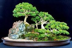 saikei...a small landscape as opposed to a single perfect tree in bonsai. I like it.
