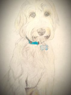 Dog Drawings, Golden Doodles, Cute Puppies, Sketching, Crafts For Kids, Art Gallery, Artsy, Printables, Watercolor