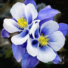 http://fineartamerica.com/featured/blue-flowers-desire-love-and-nadine-and-bob-johnston.html