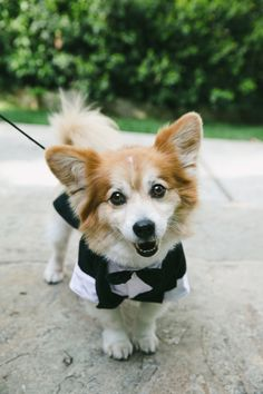Little ring bearer: http://www.stylemepretty.com/vault/search/images/ceremony