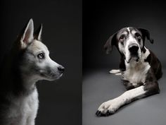 Great Pet Portraits Capture Goofy and Gorgeous: Furtographs - if it's hip, it's here