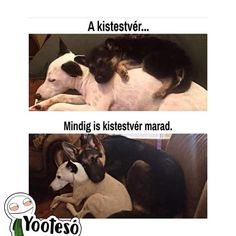 47 Super Ideas For Funny Pets With Captions Dogs Life Cute Animal Memes, Animal Jokes, Cute Animal Pictures, Cute Funny Animals, Funny Cute, Funny Pictures, Funny Animal Pics, Funny Pics, Adorable Pictures