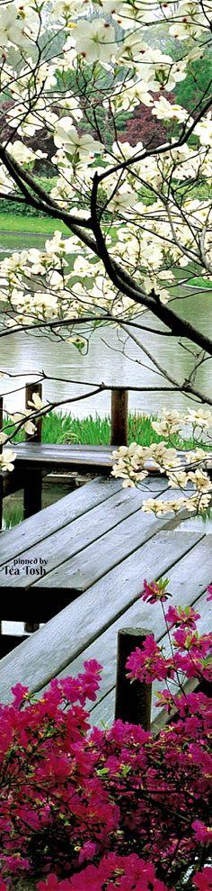 ❇Téa Tosh❇ Japanese Garden
