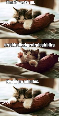 Though not as cute as the kitten, this is totally me in morning.