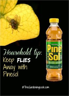 ugs hate Pine-Sol, so keep flies away with a 50 50 concoction of the product mixed with water and spritz it over everything
