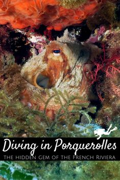 Parc National, Snorkelling, Turquoise Water, French Riviera, South Of France, Underwater Photography, Ocean Life, Marine Life, Scuba Diving