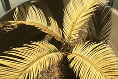 Sago palm makes a sturdy addition to the garden in warm climates. But what to do if pests and disease plague your cycads? Read more now on Gardener's Path. Sago Palm Care, Scale Insects, Types Of Insects, Plant Diseases, Citrus Trees, Seed Catalogs, Outdoor Flowers, Yellow Leaves, Yard Ideas