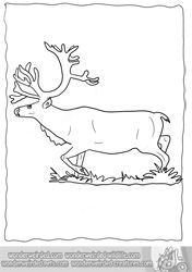 Real Reindeer Coloring Pages Realistic From Our Real Animal Coloring Pages  Collection By Echo At Www.wonderweirded Wildlife.com Beautiful Sketches To  Color ...