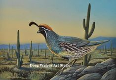 American Kestrel Hawk 11 x 14  Art Print Birds Wildlife artist by Doug Walpus