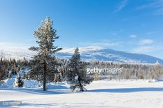 Frosty trees in a winter landscape at Pallastunturi Fell, ski... #pallastunturi: Frosty trees in a winter landscape at… #pallastunturi