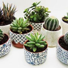 A cactus is a superb means to bring in a all-natural element to your house and workplace. The flowers of several succulents and cactus are clearly, their crowning glory. Cactus can be cute decor ideas for your room. Cacti And Succulents, Planting Succulents, Potted Plants, Garden Plants, Planting Flowers, Succulent Pots, Succulent Ideas, Hanging Plants, Succulent Arrangements