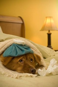 ワンちゃんの「発熱」のサインを見逃さないために・・・|「Dog Safety 倶楽部 」のファンがつくるサイト