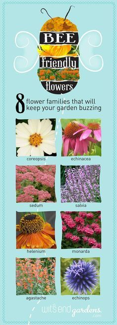 Give bees a chance with plants that attract & feed them. Grown neonic-free so bees can dine without a side of chemicals. Sedum, echinacea, salvia, nepeta, more.