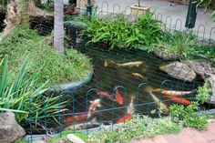pergola over pond koi ponds pinterest pond pergolas