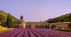 Abbey De Notre Dame's lavender fields