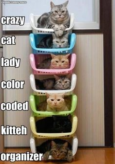 "It should say, ""Crazy cat lady color coded kitty cubbies."" hahaha. Almost perfect alliteration."