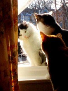 Tigger & piget new friend ms kitty