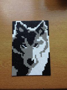 Hama wolf