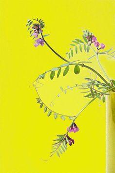 'Zaunwicke' von Heidrun Lutz bei artflakes.com als Poster oder Kunstdruck $18.03