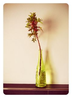In the bottle // tipo #ikebana