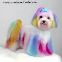 267 Best (Dyed) Colored Dogs images | Creative grooming, Dog ...