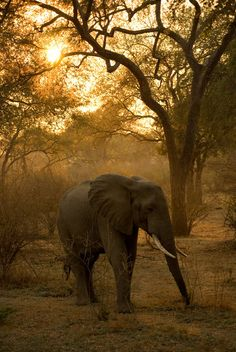 Sunrise in the South Luangwa National Park