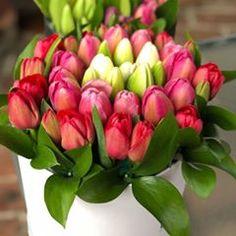 ¡Solo hoy tenemos 15% en nuestras cajas de tulipanes!   SUNSET 30 o SUNSET 60 ¡Pídela por whatsapp al 5539888726 o en www.ciudaddelasflores.com utiliza el código INSTA15 ! #flores #flowers #floreria #flor #tulipan #tulipanes #tulips #rosa #amor #tulipboxes #cajadetulipanes #cdf #ciudaddelasflores