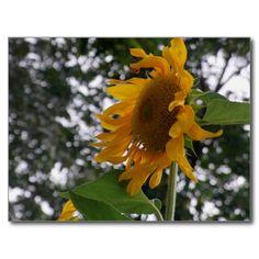 Dancing Sunflower! #flower #flowers #nature #postcard #Sunflower