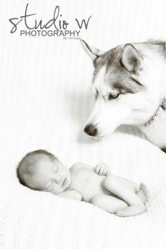 Newborn. Husky. www.studiowphoto.com mailto:Studiowinfo@yahoo.com