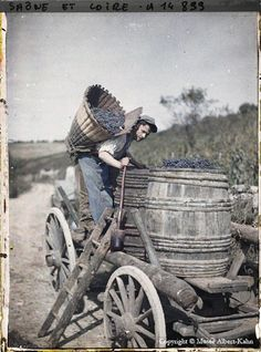 Collecting grapes for wine! A photo of France in the 1920's set in color.