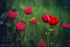Lovers in the Wind by ~alexgphoto on deviantART