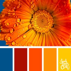 Explore the beautiful colors of nature with these 25 color palettes inspired by flowers bouquets and gardens Find more floral and beautiful color combinations color schemes and color palettes at Orange Color Palettes, Spring Color Palette, Colour Pallete, Spring Colors, Colour Schemes, Color Patterns, Yarn Color Combinations, Beautiful Color Combinations, Colorful Garden