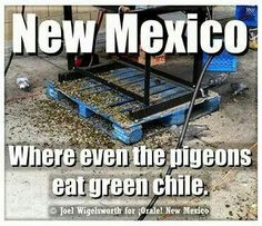 ~Only in New Mexico - where even the pigeons eat Hatch Green Chiles~