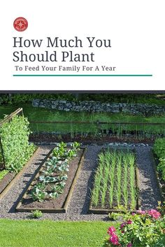 How Much You Should Plant To Feed Your Family For A Year - Think about how much your food your family would need to survive for a year if SHTF. Deciding how large your vegetable garden will be requires a number of factors; how many members, what types of Veg Garden, Vegetable Garden Design, Edible Garden, Vegetable Gardening, Hill Garden, Vegetables Garden, Veggie Gardens, Garden Types, Garden Beds
