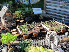 Planted into an old, rusted wheelbarrow. Wheelbarrow, Perth, Farm House, Succulents, Miniatures, Garden, Plants, Garten, Lawn And Garden