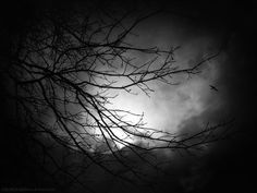 Brooding Boughs by SheWalksInSilence (print image)
